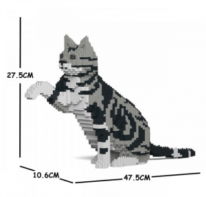 American Shorthair Cat paw