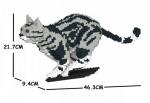 American Shorthair Cat running
