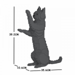 Cat  dark grey