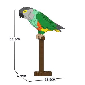 Senegal Parrot 01S