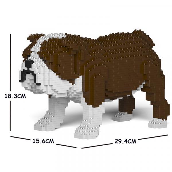 Englische Bulldogge braun-weiß