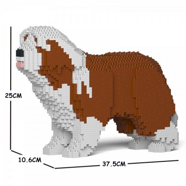 Bearded Collie brown-white