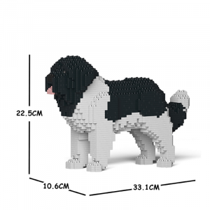 Newfoundland Dog black-white