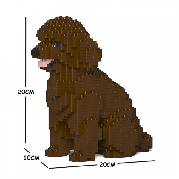 Toy Poodle sitting + brown