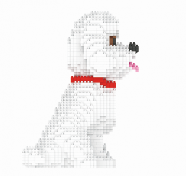 Bichon Frises, dog