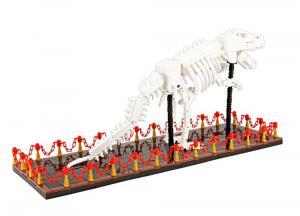 T-Rex Skelett Ausstellungsstück