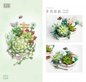 Sukkulente Topfpflanzen (mini blocks)